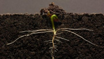 Beanstalk Grows in Time-Lapse
